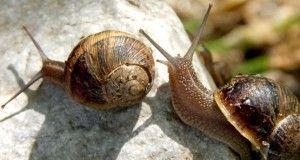 Respeto a los caracoles